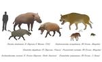 Un-hellish land hippos - Entelodonts