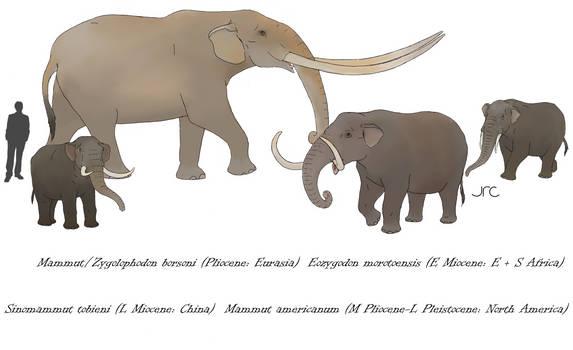 Not elephants 1 - Mastodons