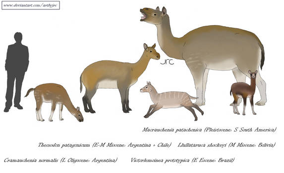 Odd-nose pseudocamels - Macraucheniids