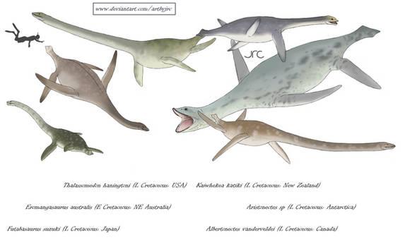 Swan necks no more - Elasmosaurids
