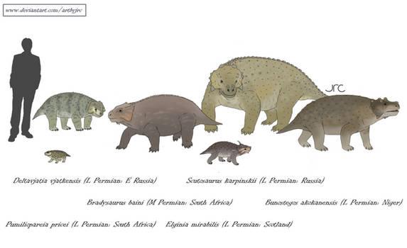 Bumpy beasts - Pareiasaurs