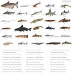 Never-ending variety 3 - Catfish