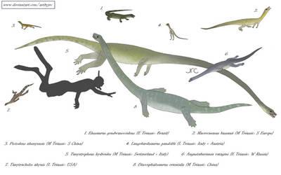 Extraordinary elongation - Tanystropheids