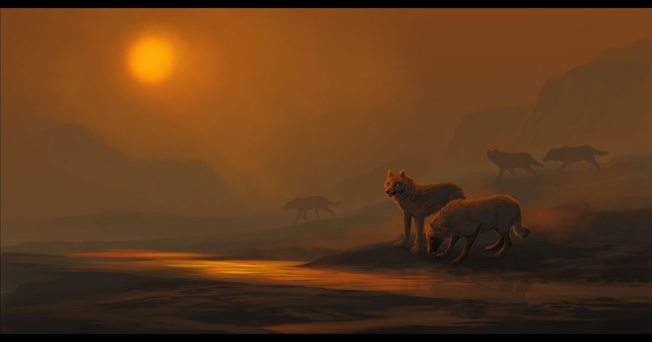 DotW - Early Morning Fog