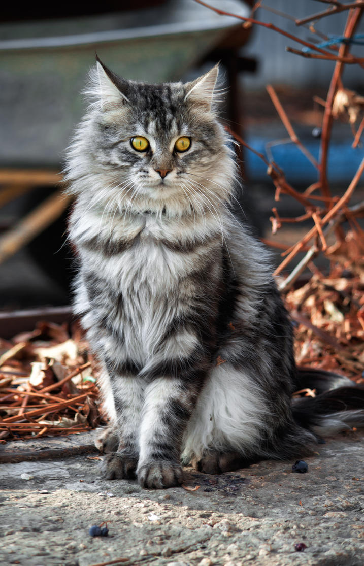 cat Stepan by Leya-Voron