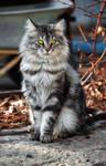 cat Stepan