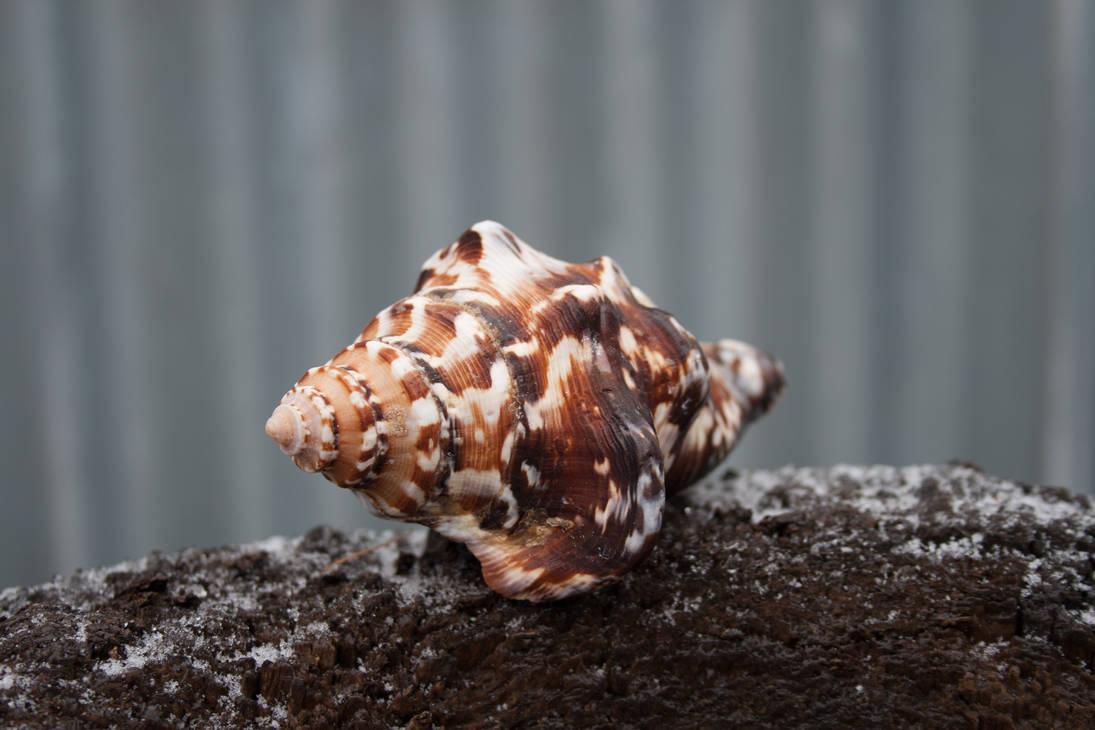 seashell by Leya-Voron