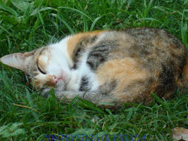 Dreamin cat