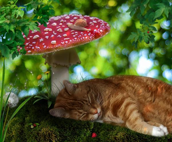 Midsummer Dream by Ladesire
