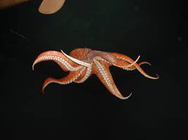 octopus by mysilentsky-stock