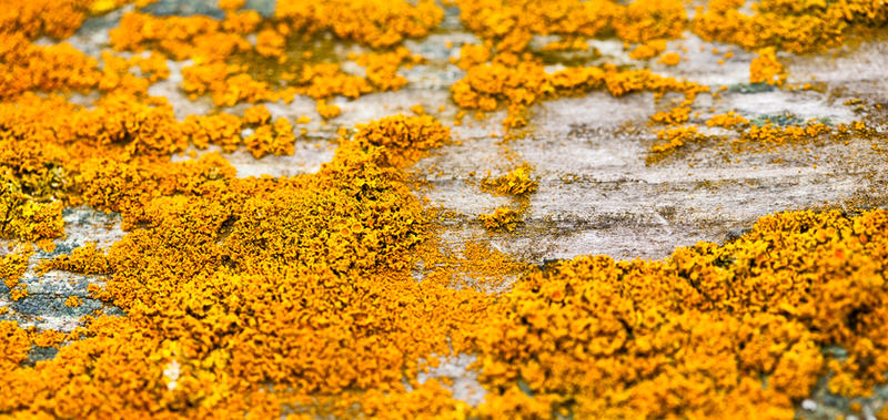 Yellow Lichen At Fort Flagler by AaronPlotkinPhoto