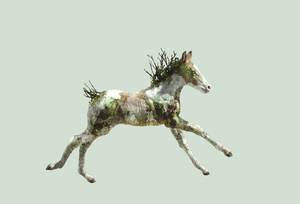 earth foal