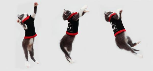 Dance Kitty Dance by RadiancePhotography1