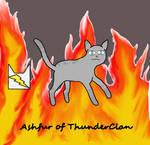 Ashfur of ThunderClan