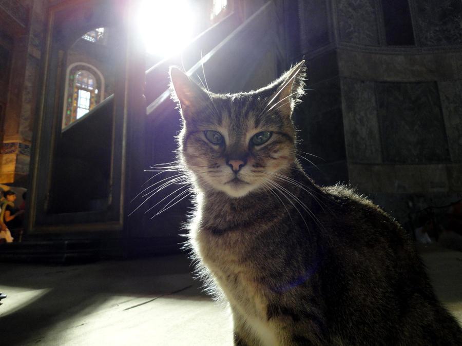 the cat in the temple by sakurapanda