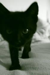 Black Kitty by Jelena