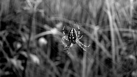 Spiders web by suc69