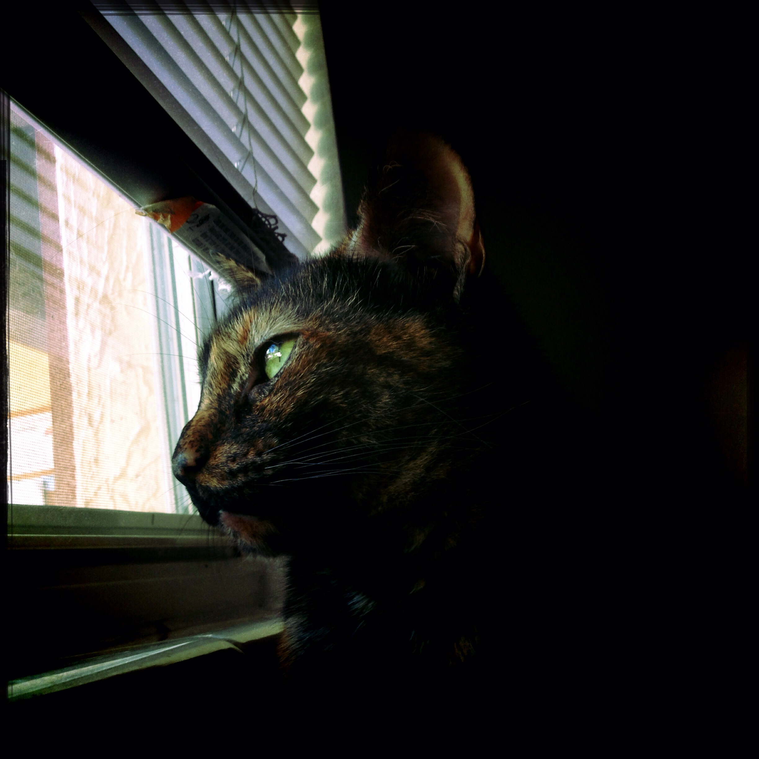 Marbles in the Window by fuzzyedges