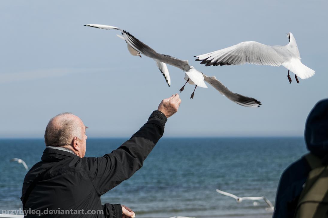Man feeding seagulls by PrzybyleQ