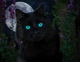 Midnight Cat by Aysha1994raven