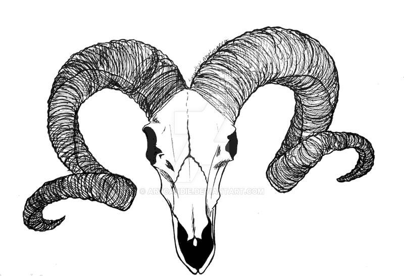Ram's Head by Artcandie