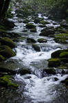 downstream beauty
