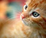 colorful kitten