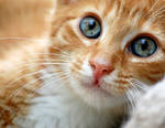 biggest blue eyes