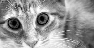 intense stare