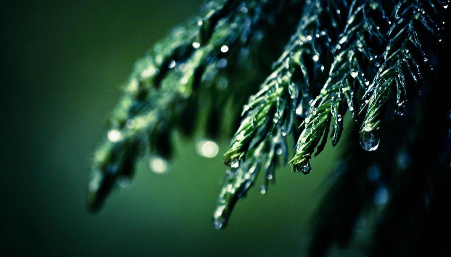 earth day rain by xthumbtakx