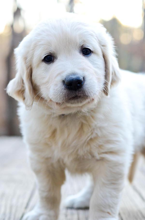 puppy's first portrait by xthumbtakx