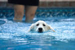 My First Swim