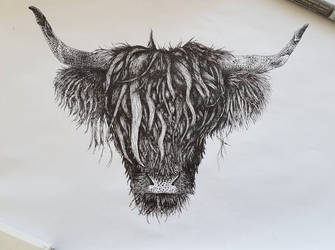 Highland Cattle, ink, A4 by Biodrawing