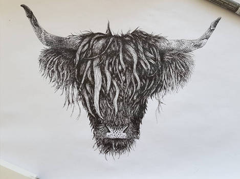 Highland Cattle, ink, A4
