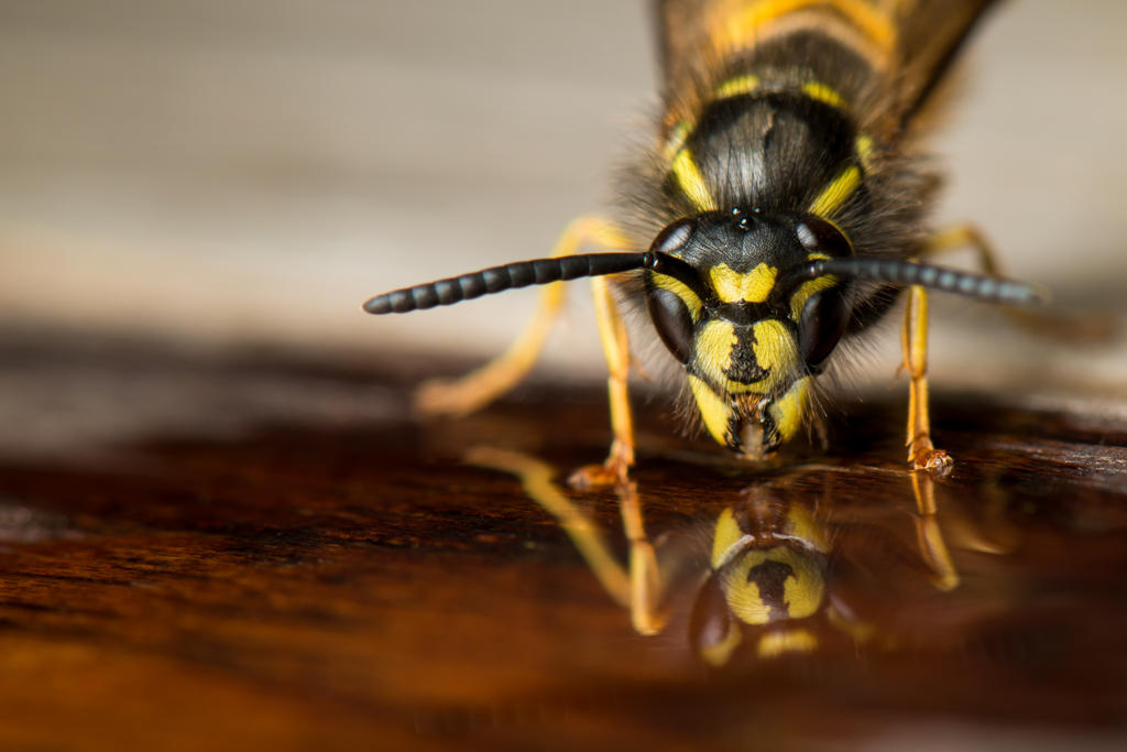 Wasp Reflections by gmwebs