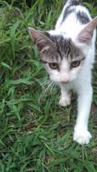That one random kitten