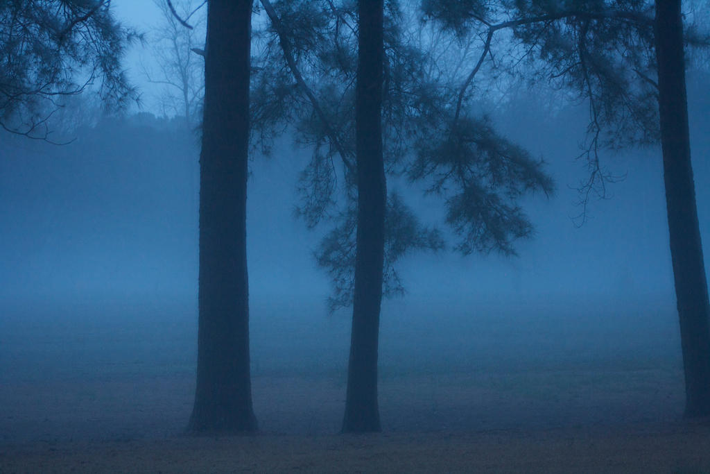 Foggy Evening by AngelicalDesign