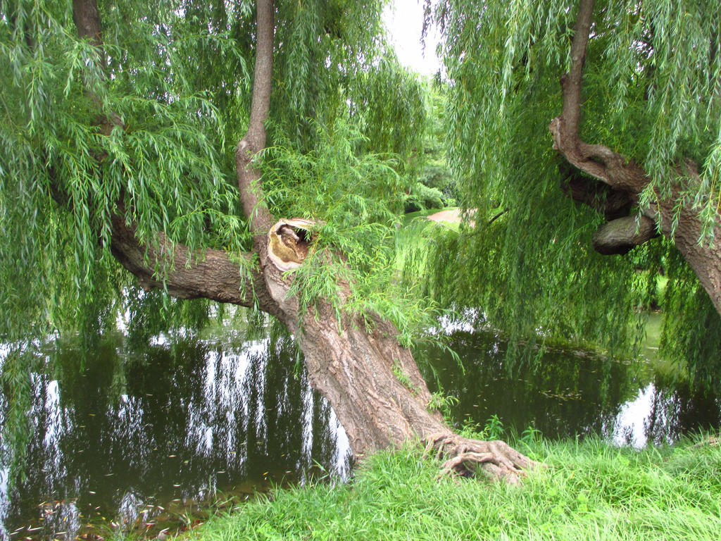 Old Willow by AngelicalDesign