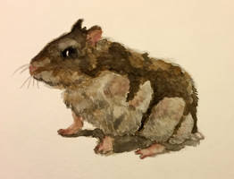 Reggie in Watercolor
