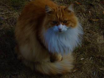 Cat or Fox ? by ELGringe