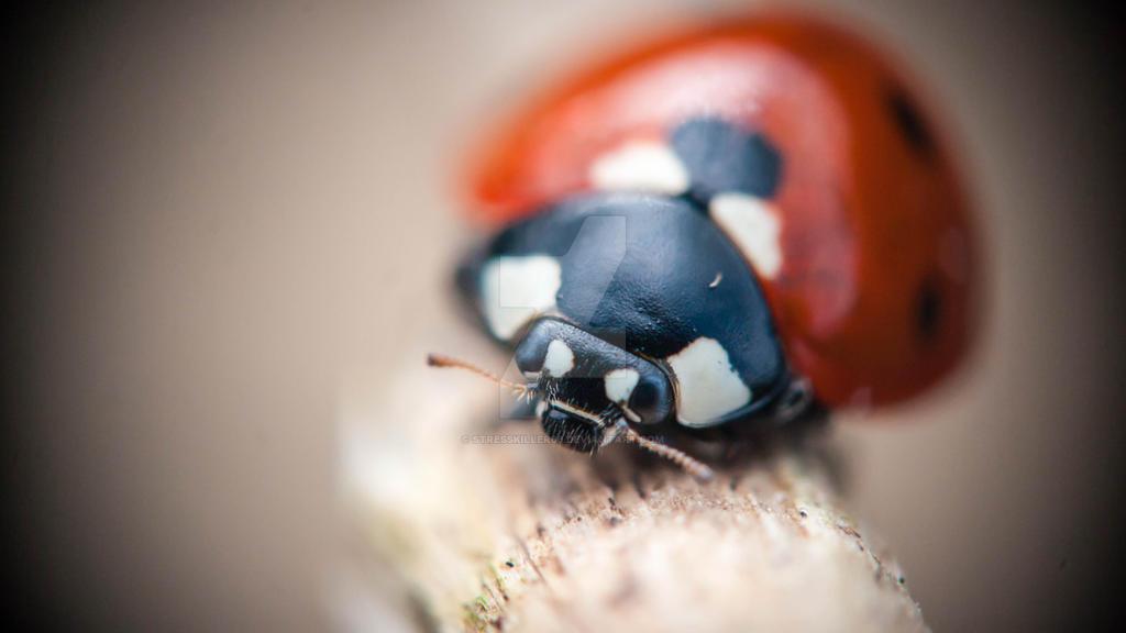 portrait of a ladybug by stresskiller66