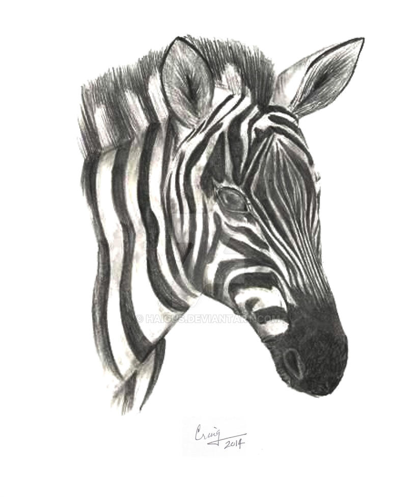 How to draw a zebra head