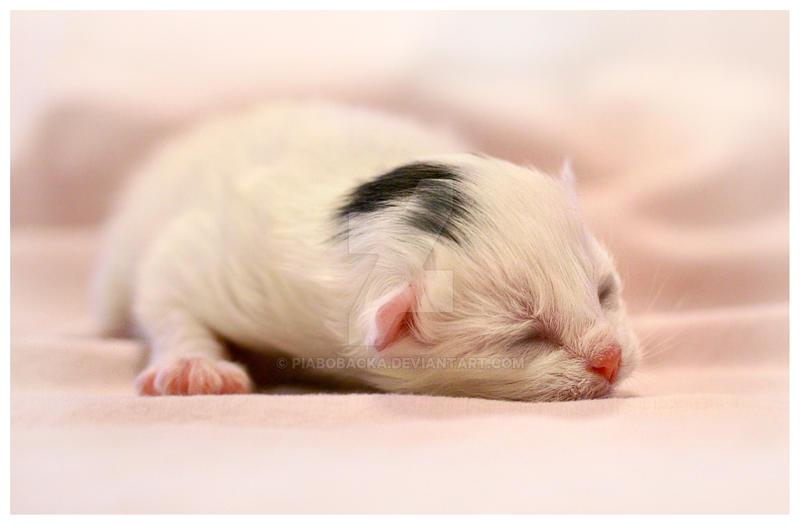 Kittysleep by PiaBobacka