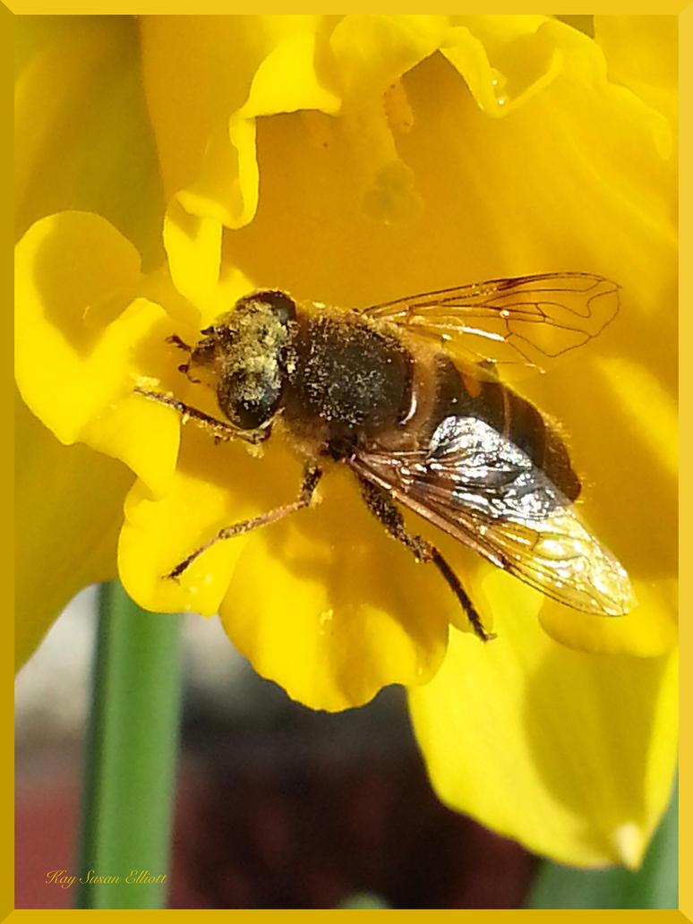 Pollen Catcher by Kaysusanelliott