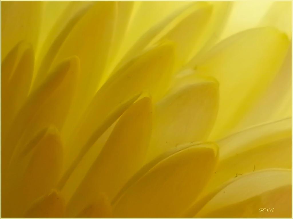 Flower Wings by Kaysusanelliott