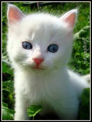 Baby by flendurica