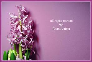 Spring Time by flendurica