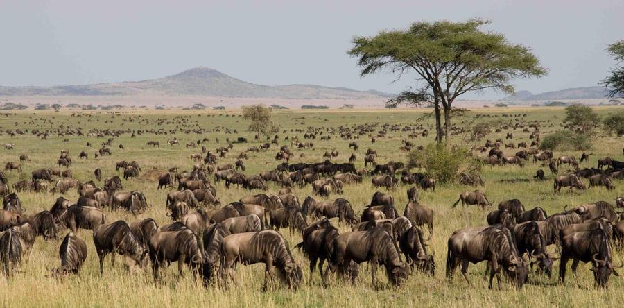 Life on the African Savanna I by MarianGutu