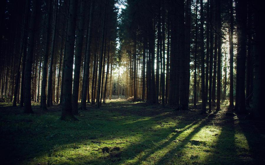 Forest by man-of-faith