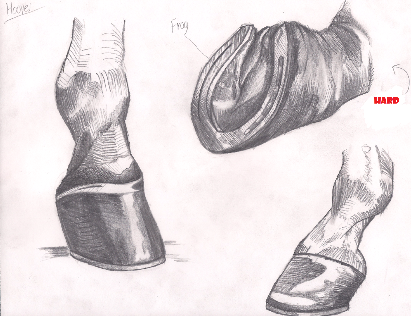 Horse Practice #3 (Hooves) by Graboiidz